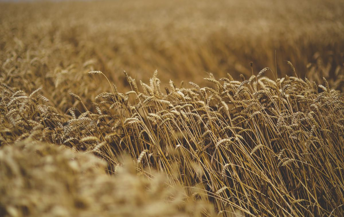 Wheat Field Cereal #13869