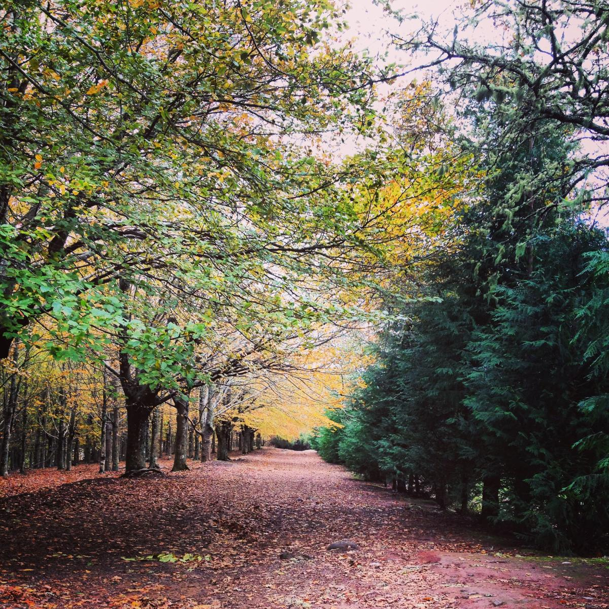 Tree Landscape Oak