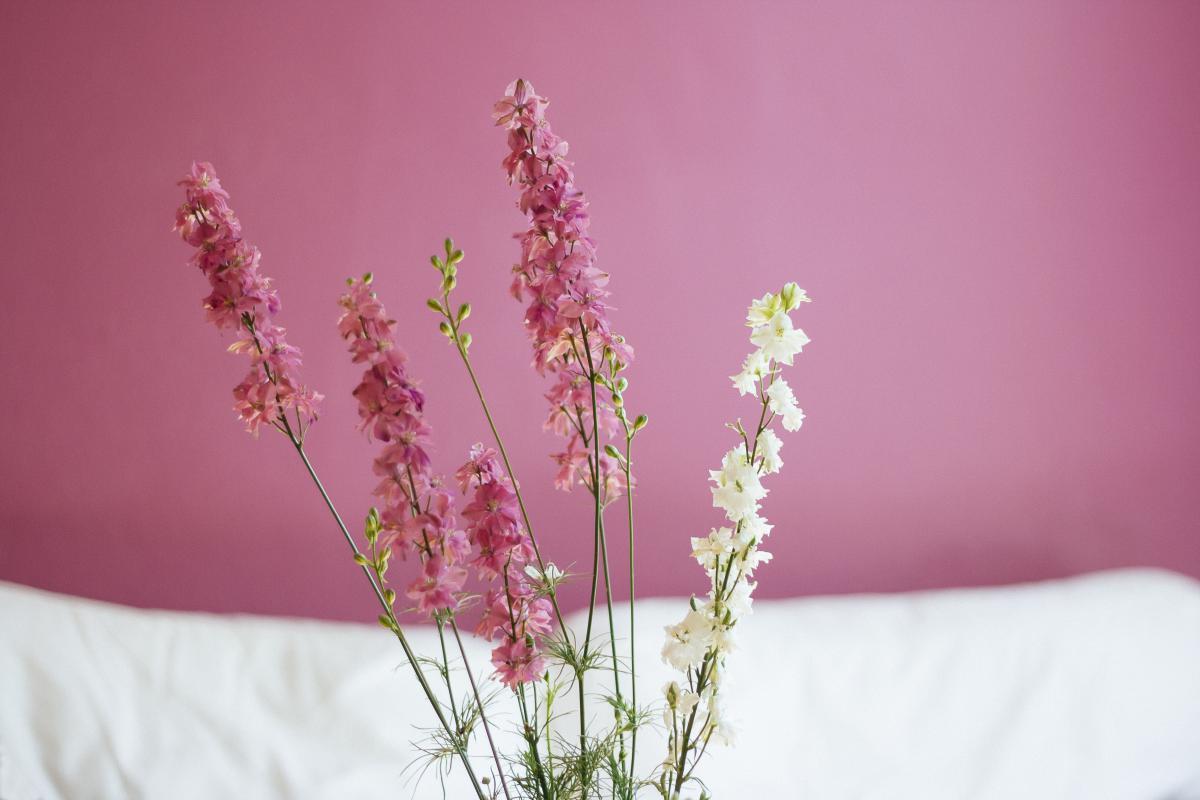 Pink Flower Blossom #14066