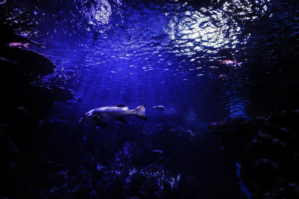 Scuba diver Diver Aquarium #14082