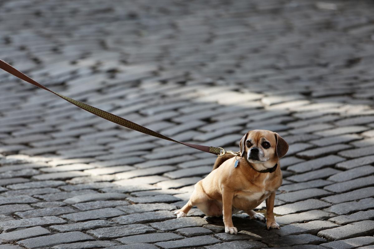 Dog Hunting dog Canine #14085