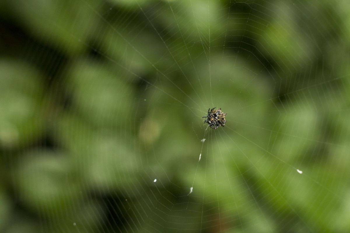 Spider web Web Spider