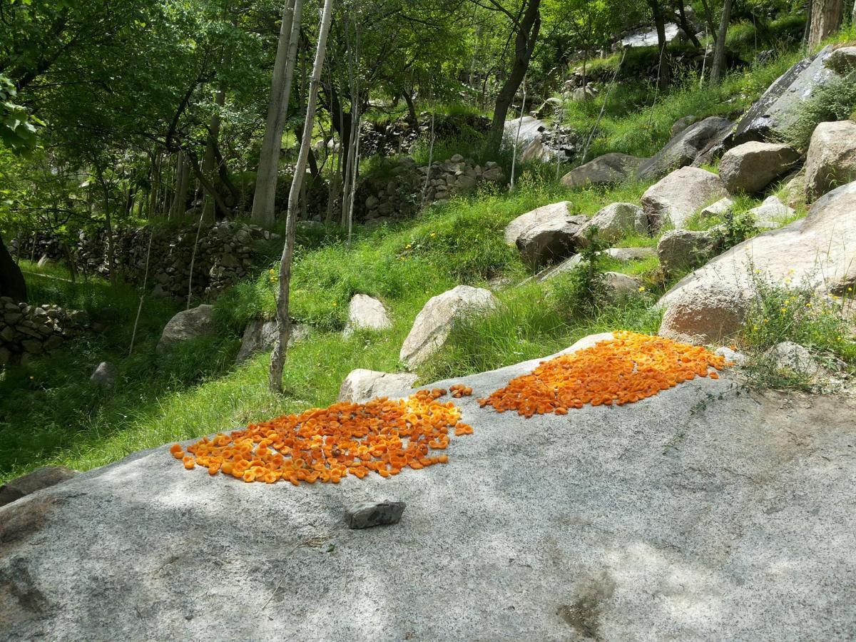 Season Garden Natural #141981
