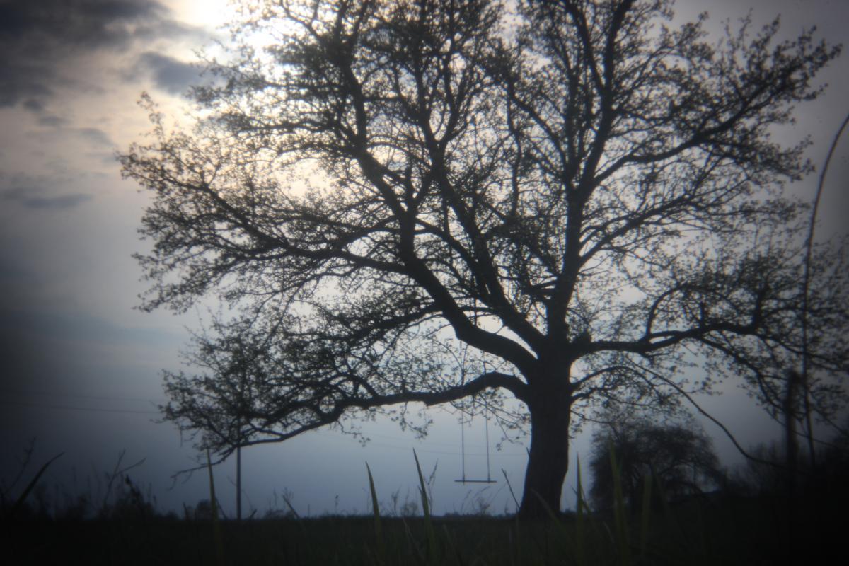Tree Oak Forest #143046