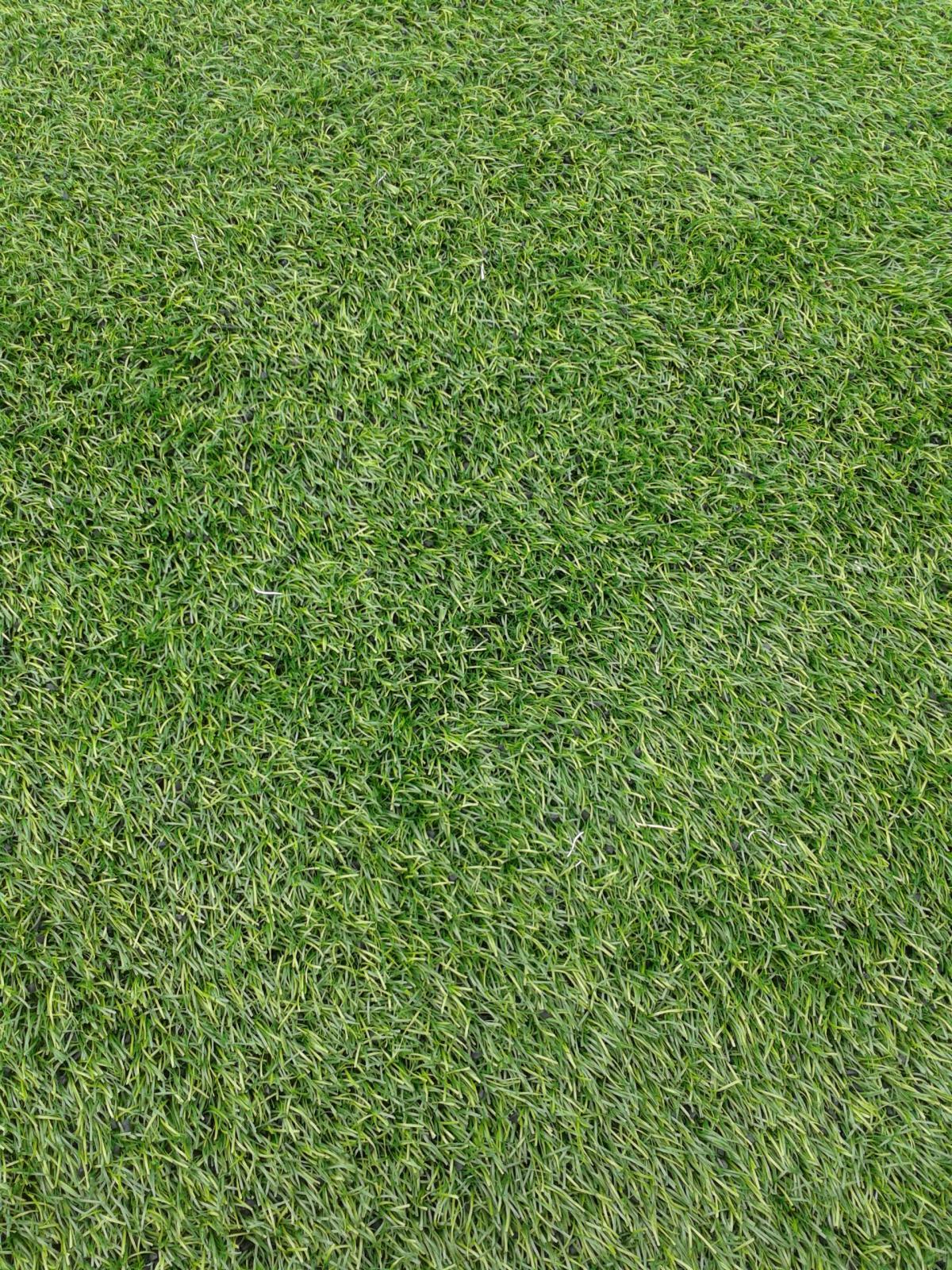 Yard Grass Greenery #143871
