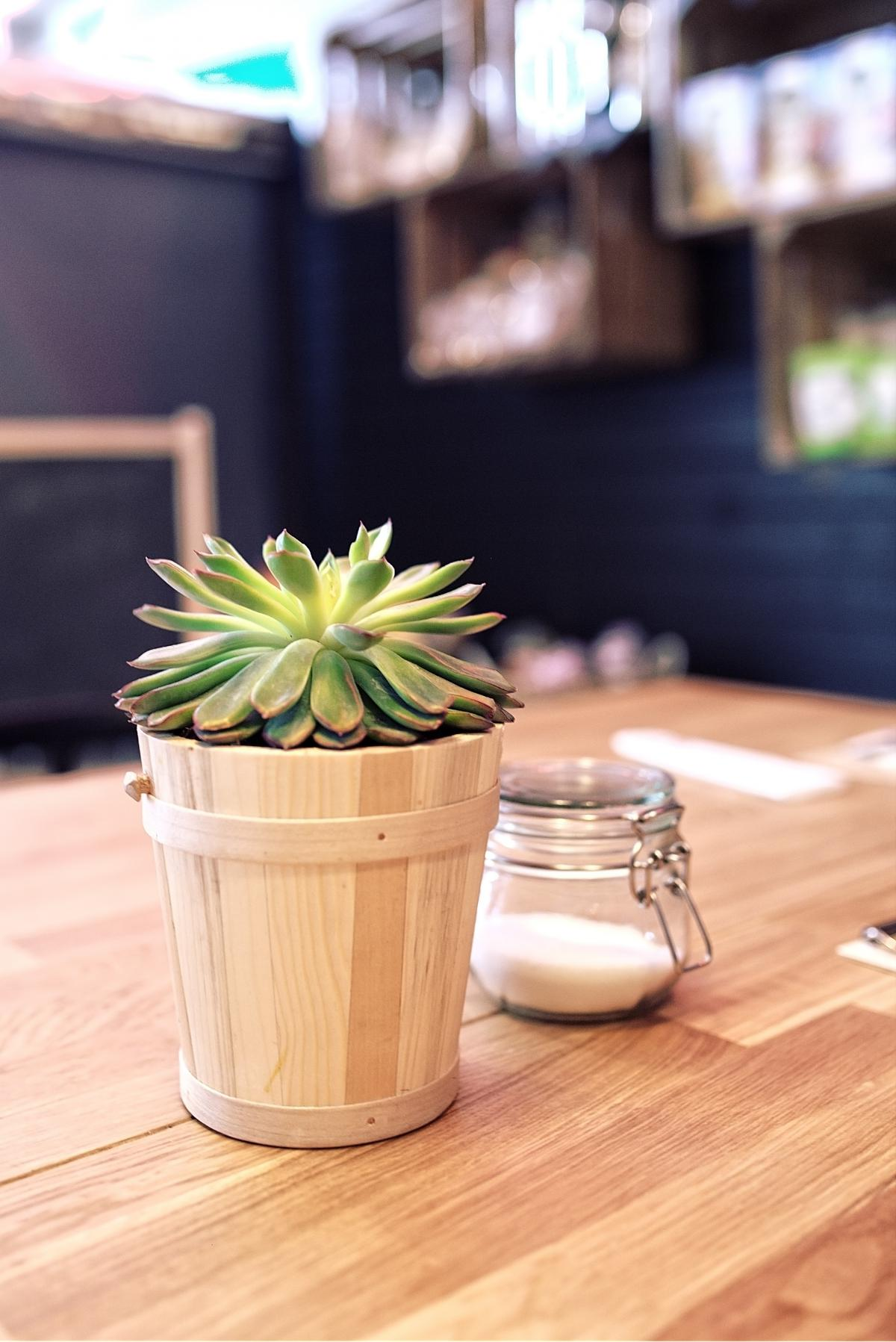 Flower Vase Plant #14476