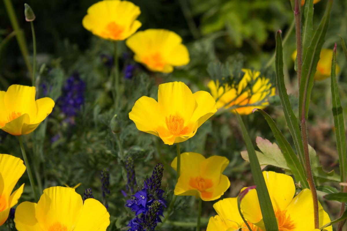 Free Flower Yellow Herb 14493 Stock Photo Avopix
