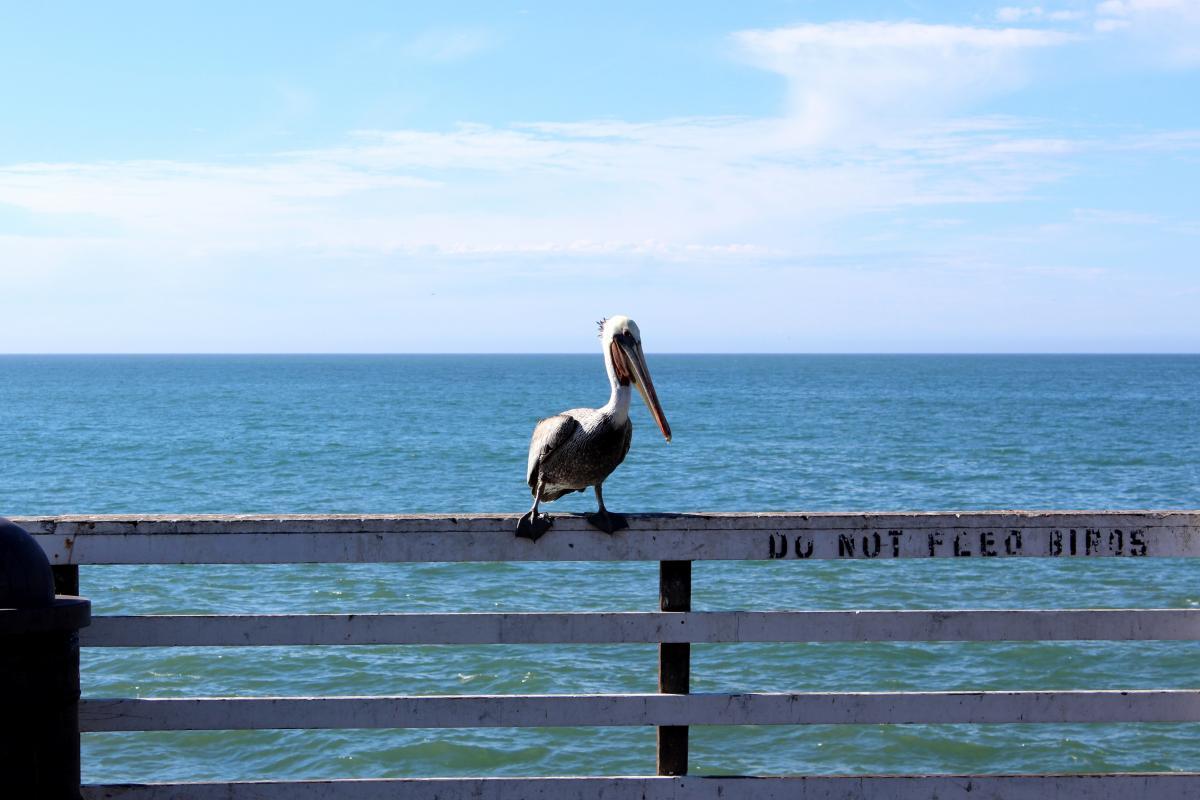 Albatross Seabird Bird #145703