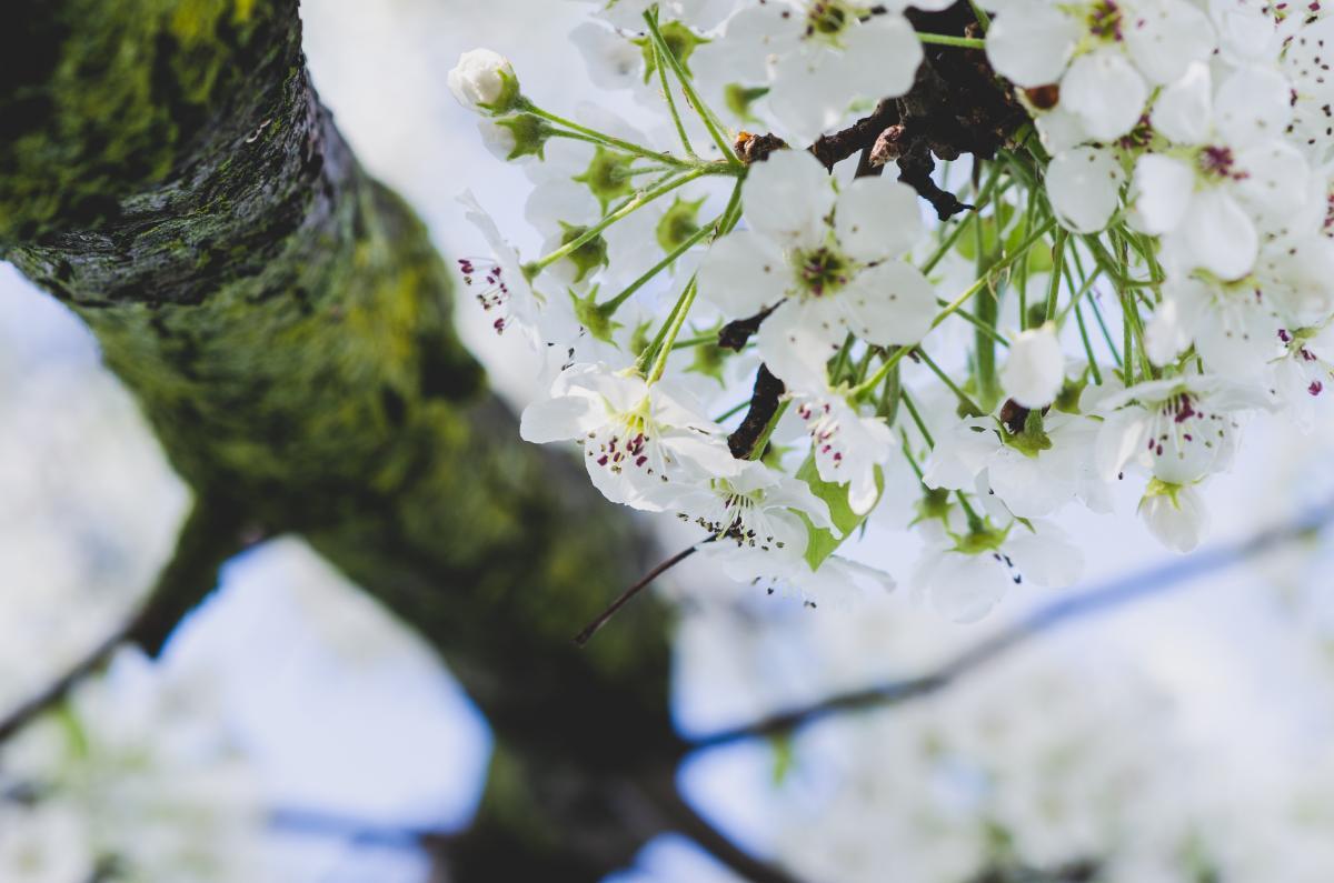 Fleur Plante Feuille #146238