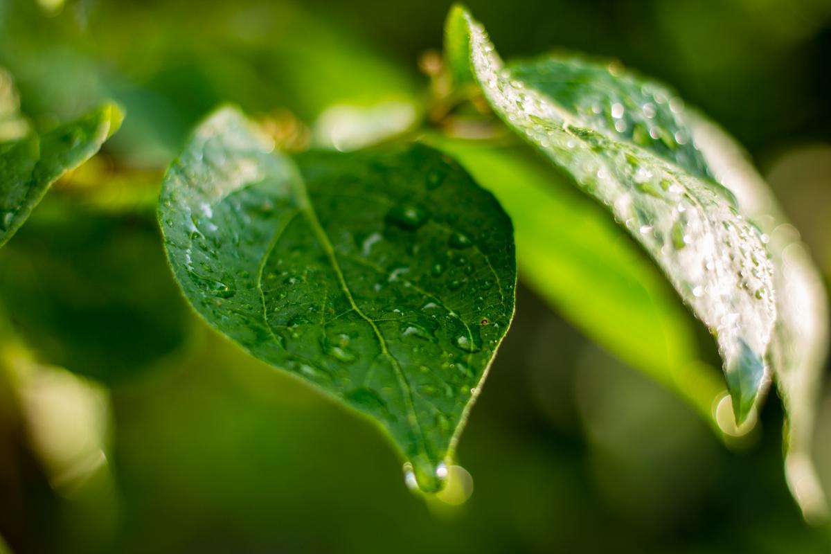 Herb Plant Vascular plant #146384