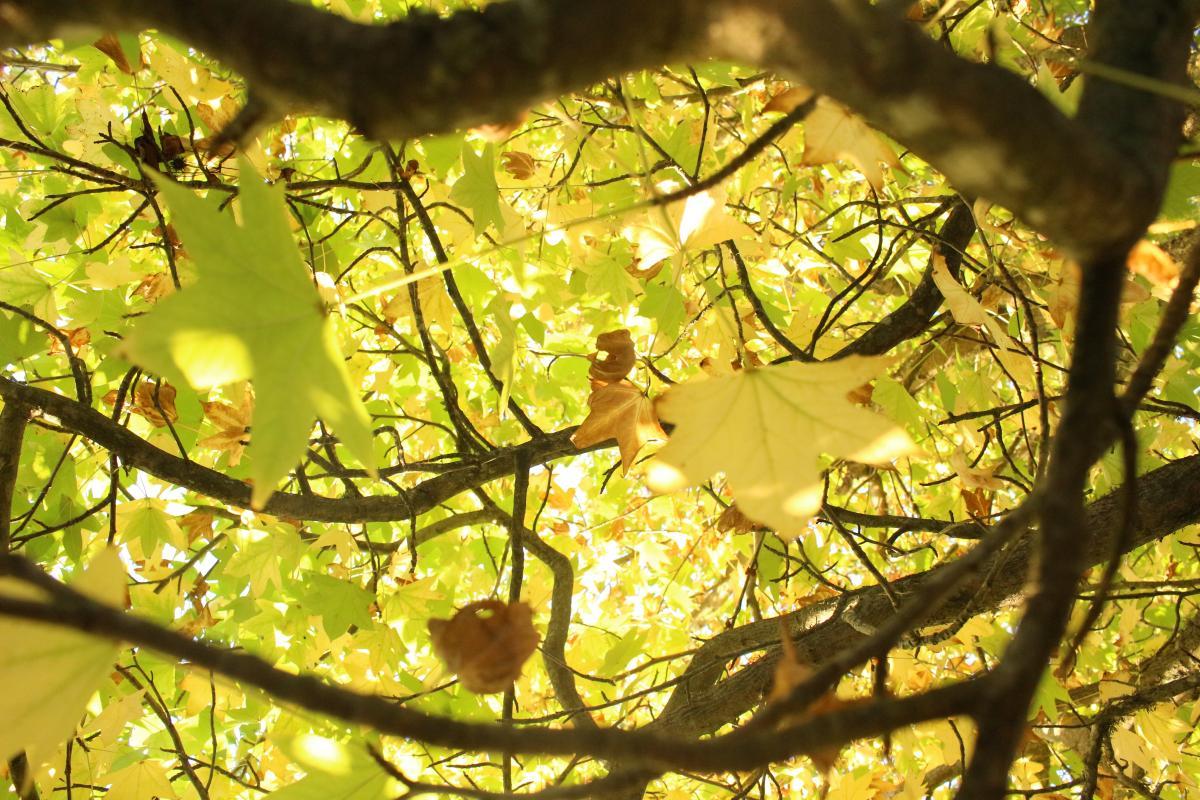 Plant Leaf Web