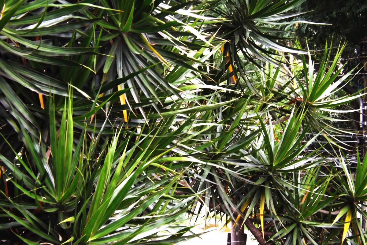 Plant Leaf Tree