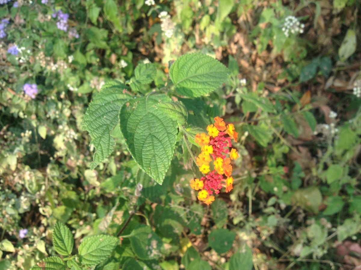 Plant Vascular plant Poisonous plant #149209
