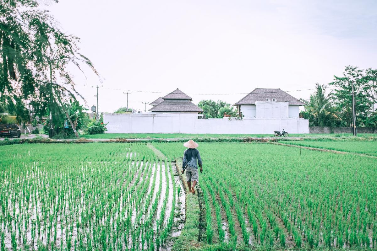 Landscape Grass Field #153758