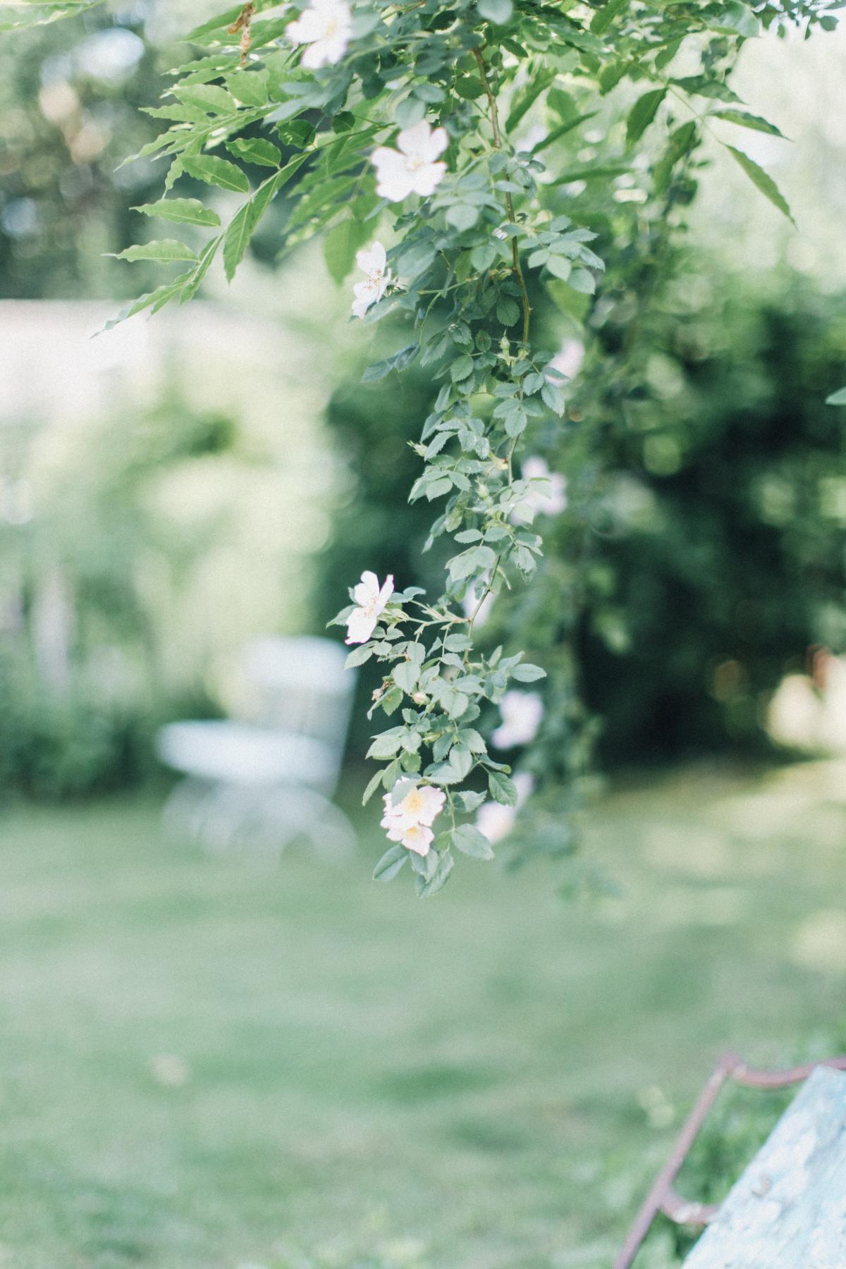 Plante Herb Arbre #155420