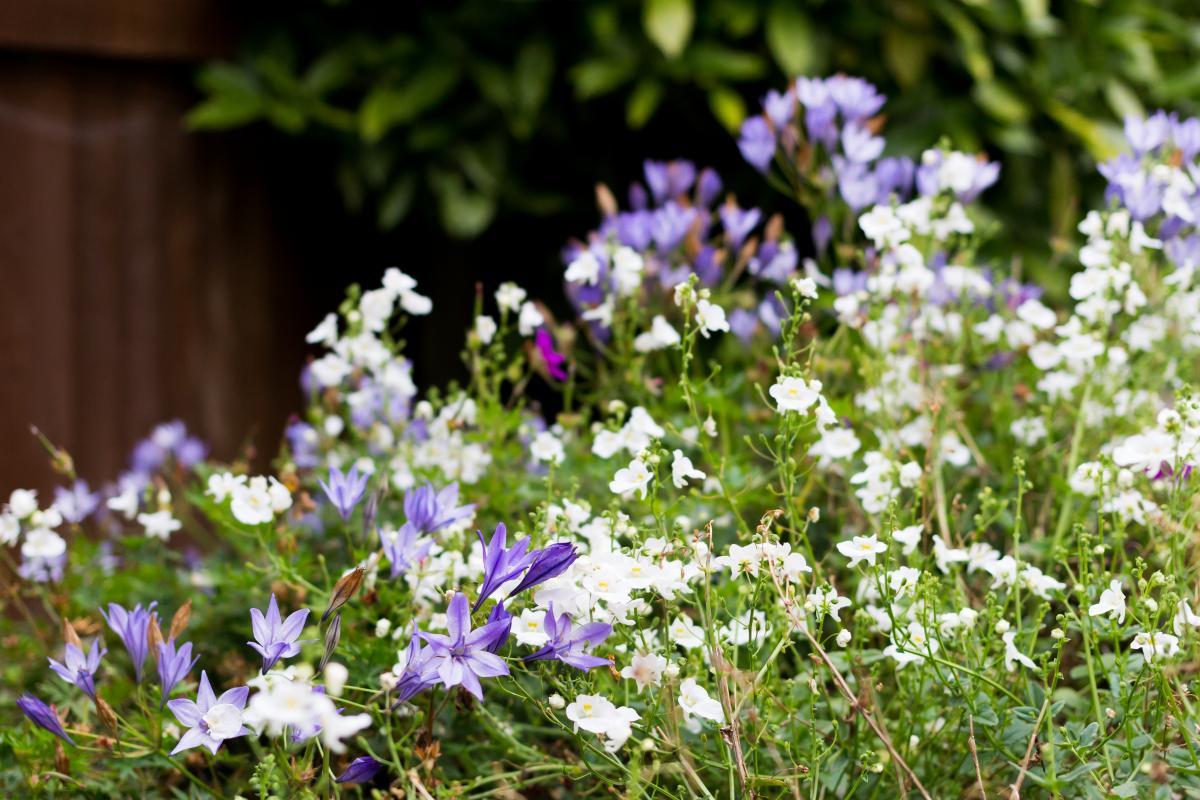 Herb Vascular plant Plant #157732