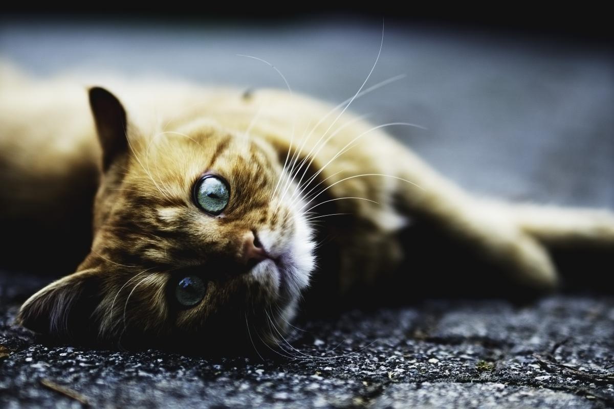 Kitty Kitten Cat #159091