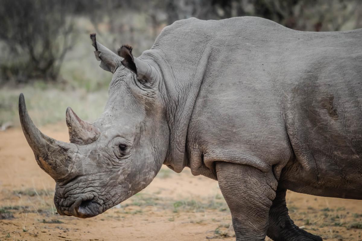 Mammal Warthog Elephant #16061