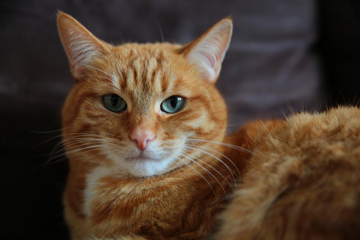 Cat Feline Kitten #160872