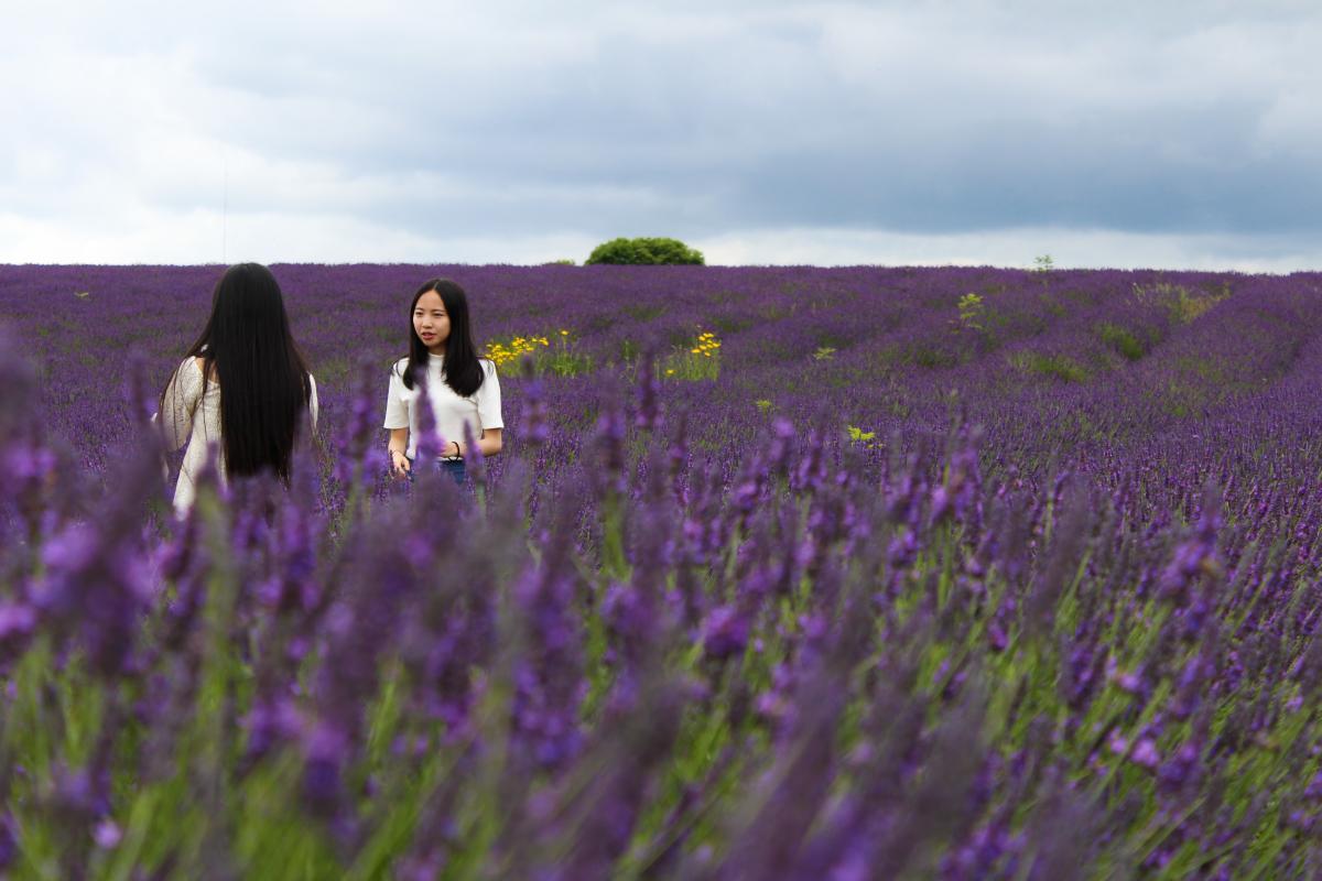 Purple Sky Field #160962
