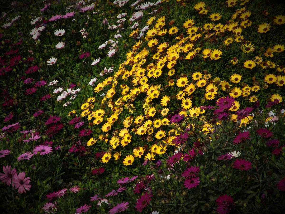 Flower Plant Spring #161334