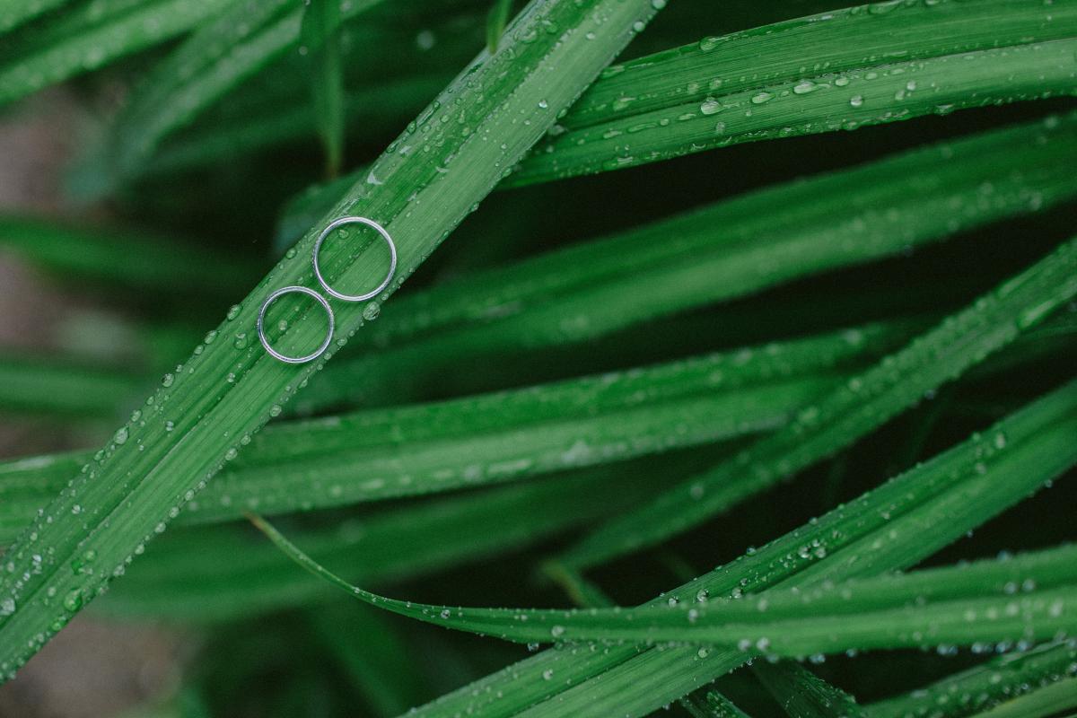 Drop Leaf Rain #163048
