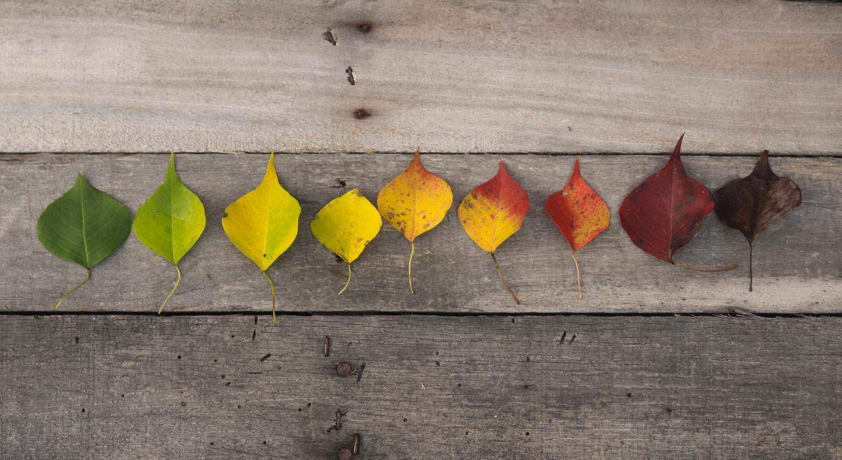 Autumn fall colorful  #16519