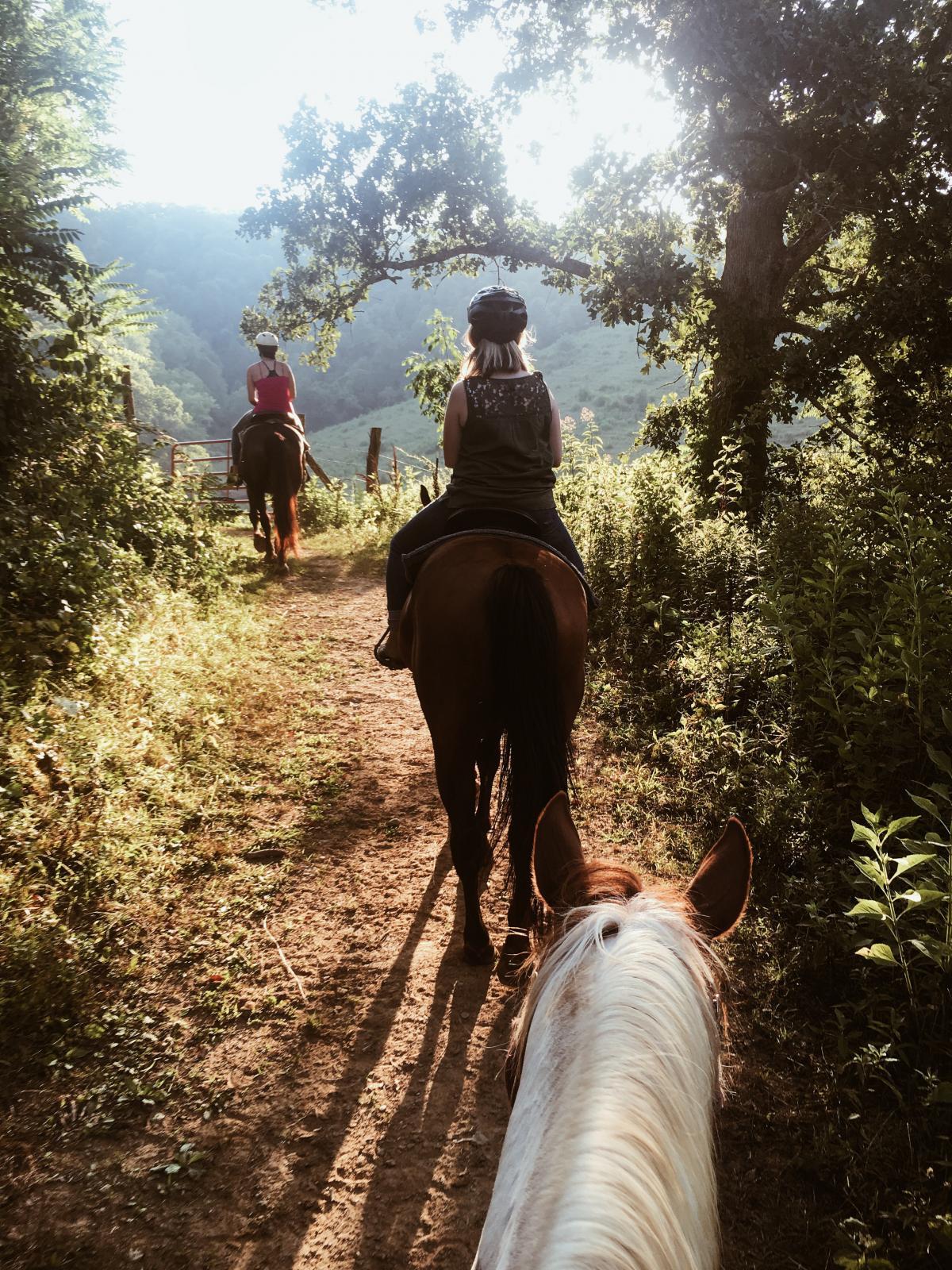 Resort Cowboy Horse
