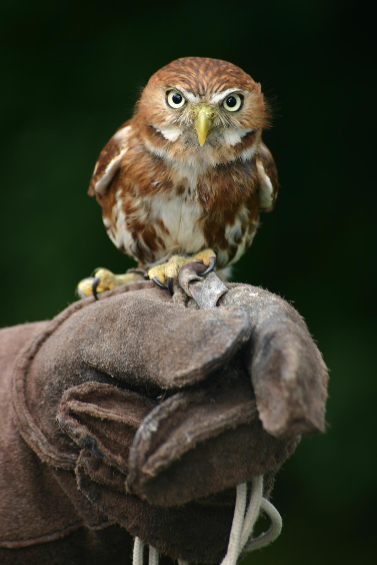 Bird Hunter Predator