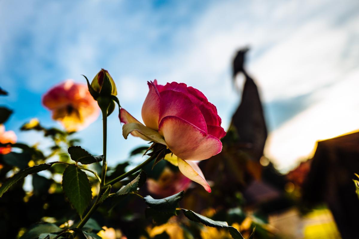Bud Flower Plant #170944