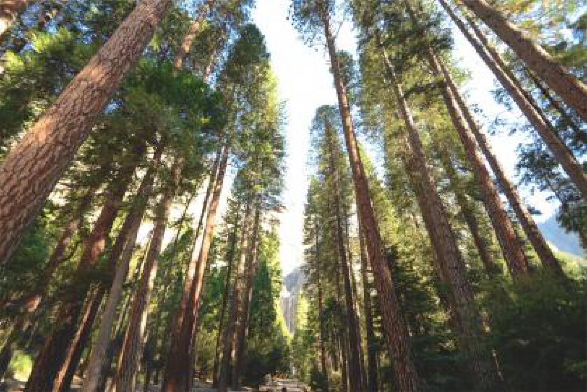 trees tree trunks nature