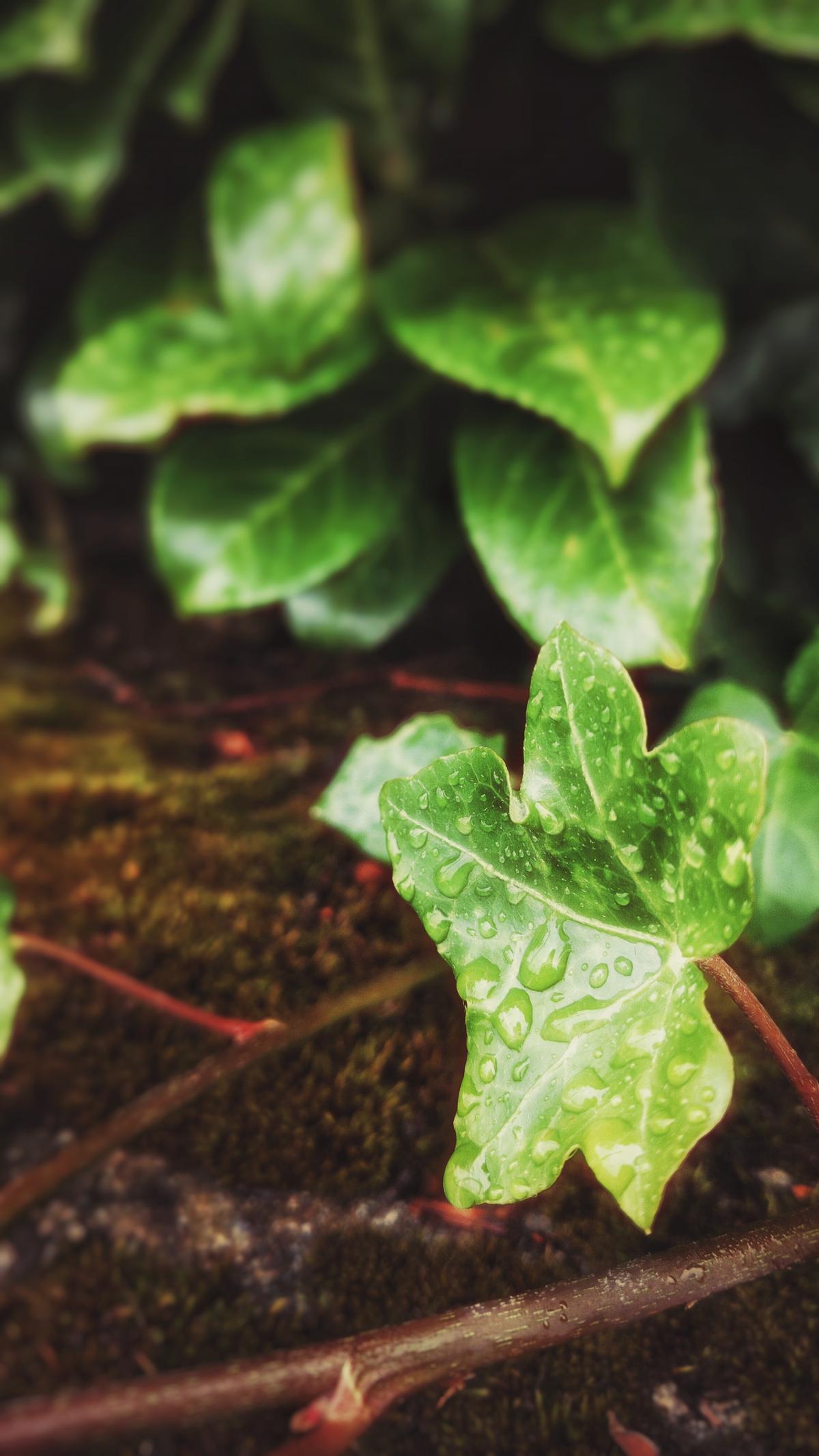 Greens Blattpflanze #175200