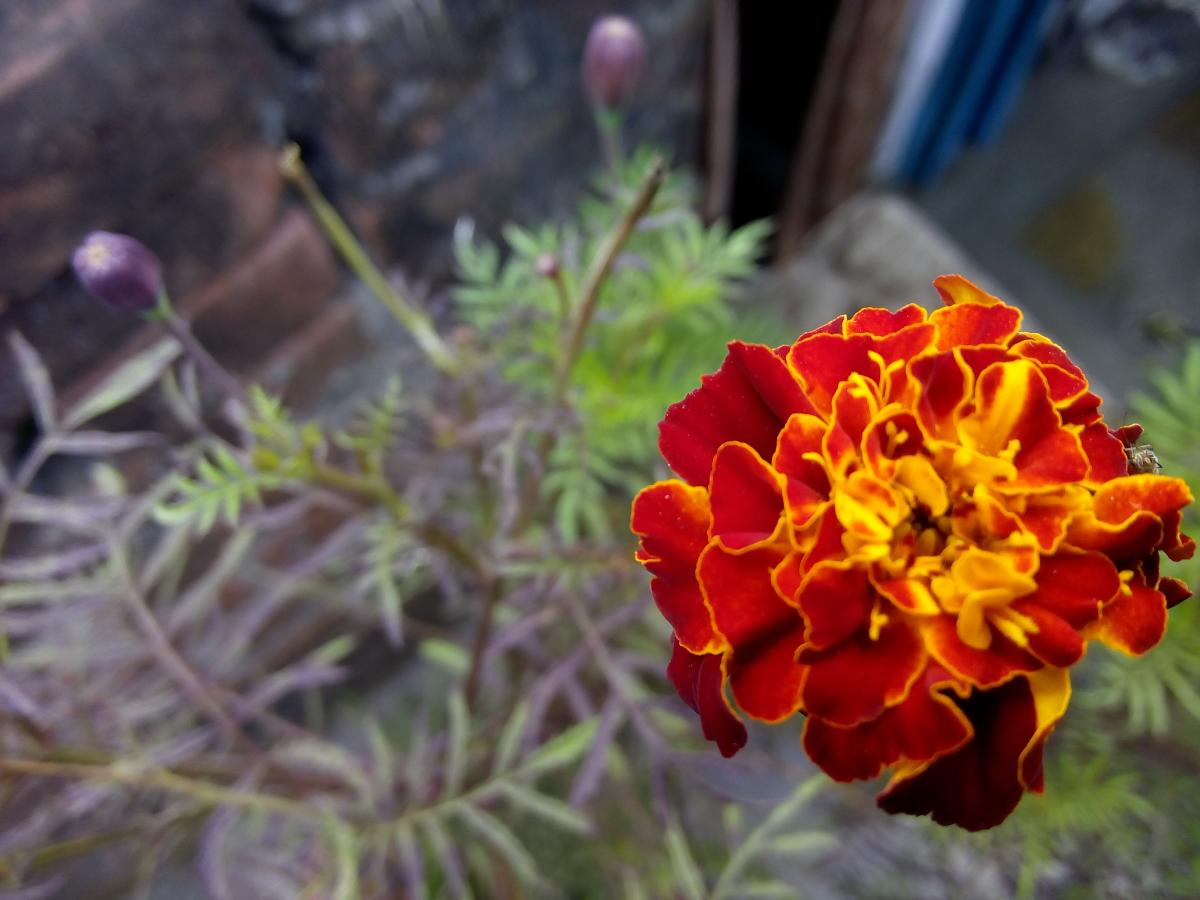 Flower Plant Shrub #178604
