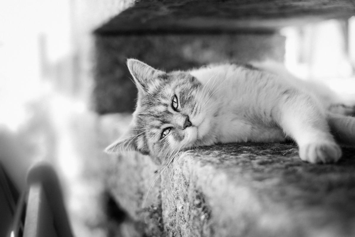 Cat pet animals  #18108