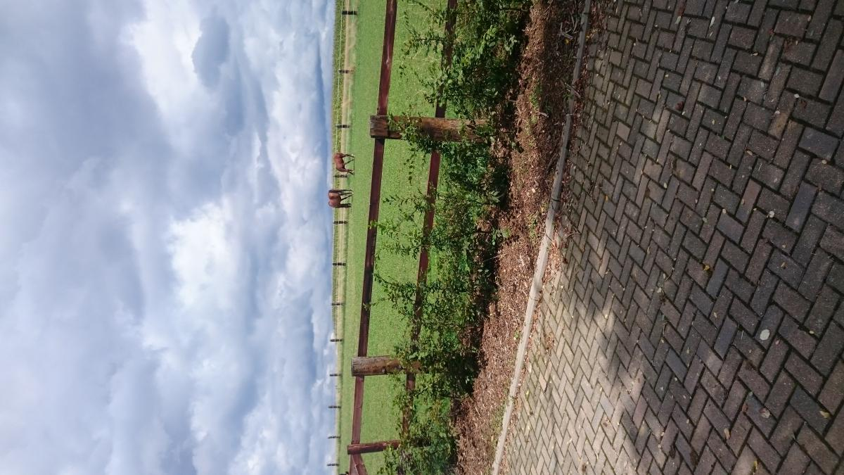 Fence Sky Outdoors #182508