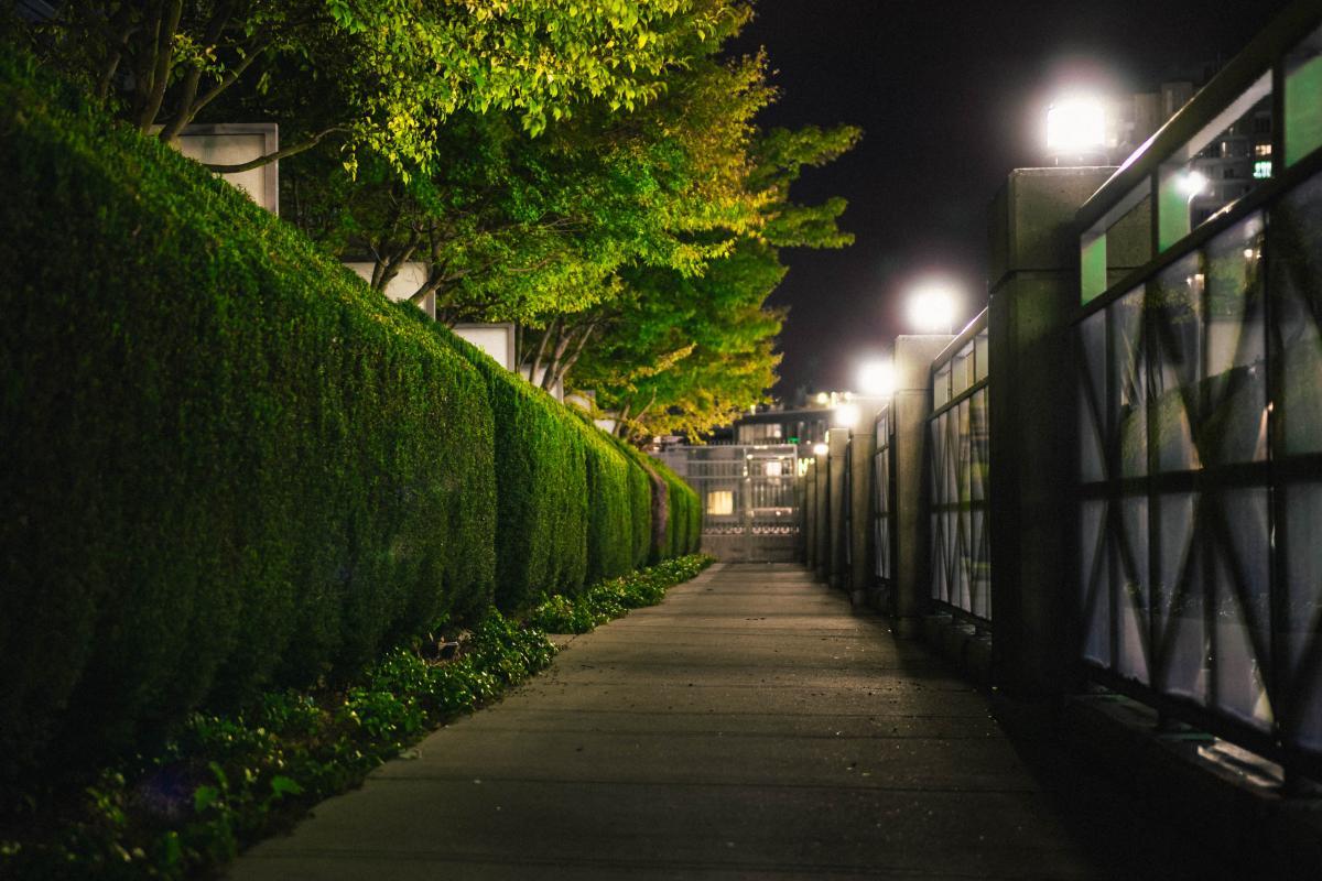 Tree Landscape Sidewalk