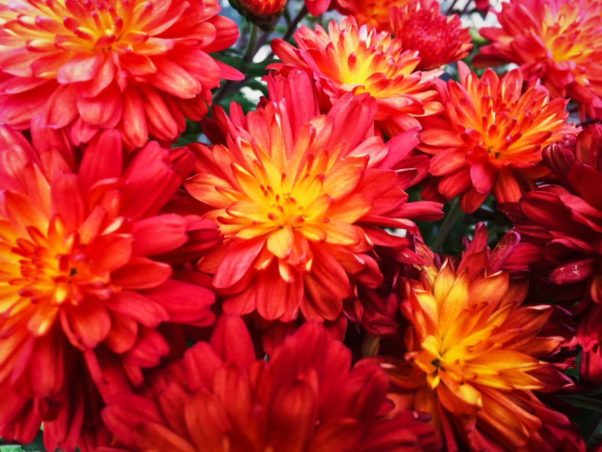 red flowers garden