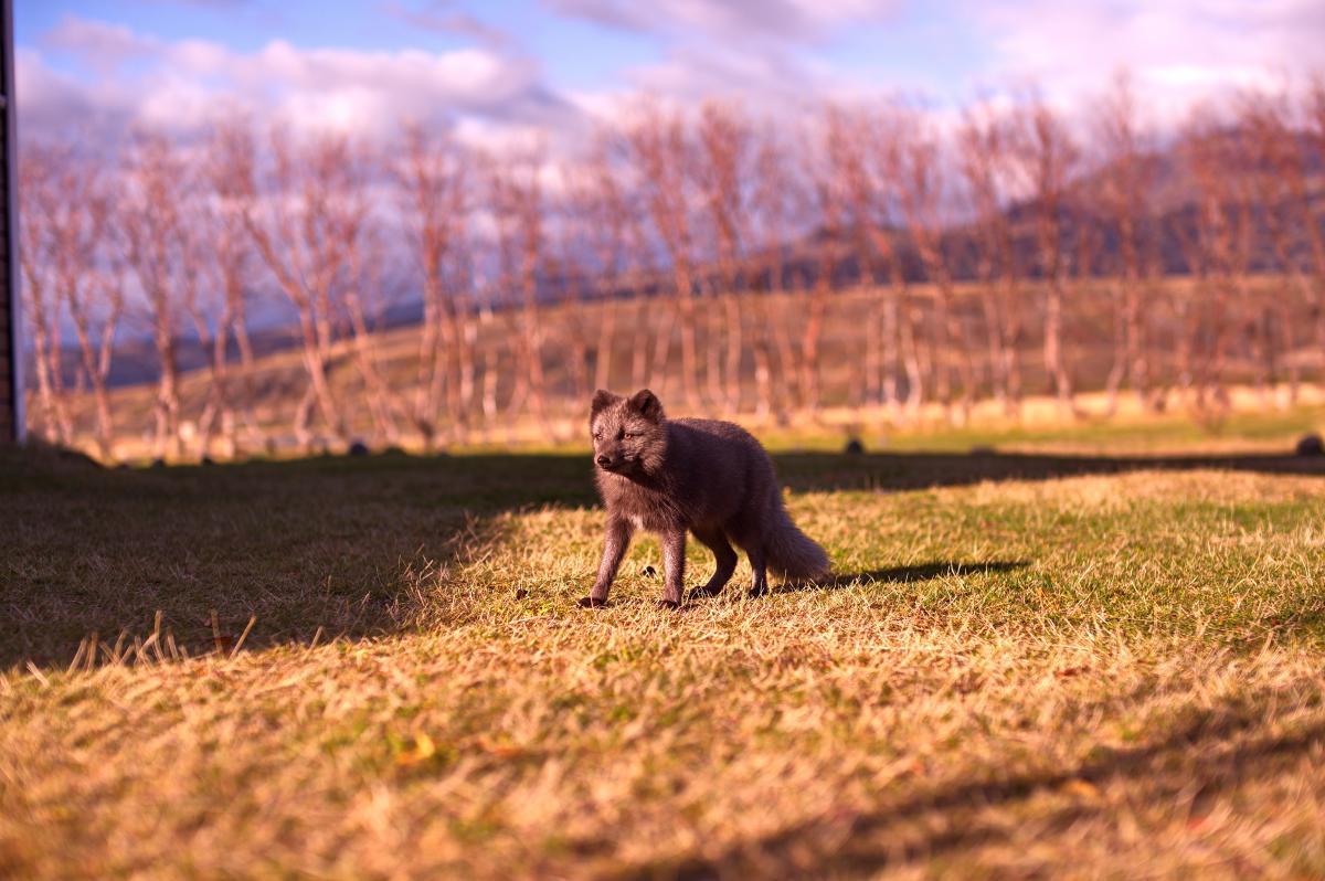 Dog Canine Grass #187240