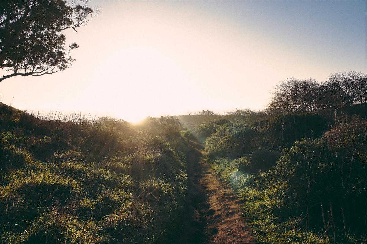 trail path grass