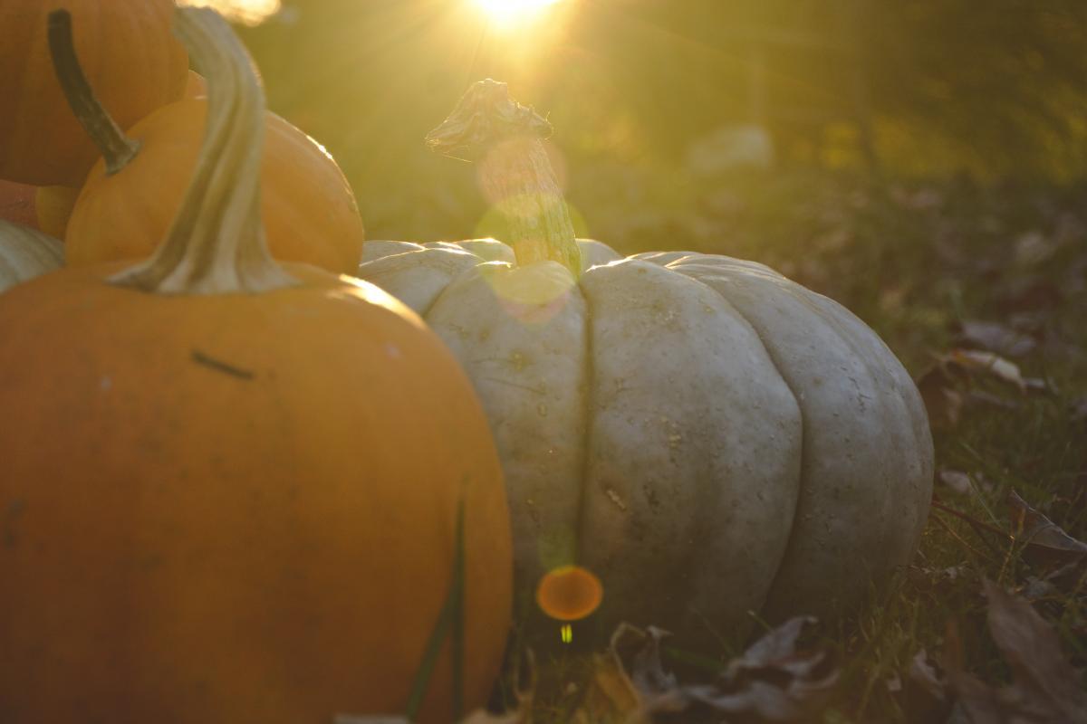 Pumpkin Bulb Squash