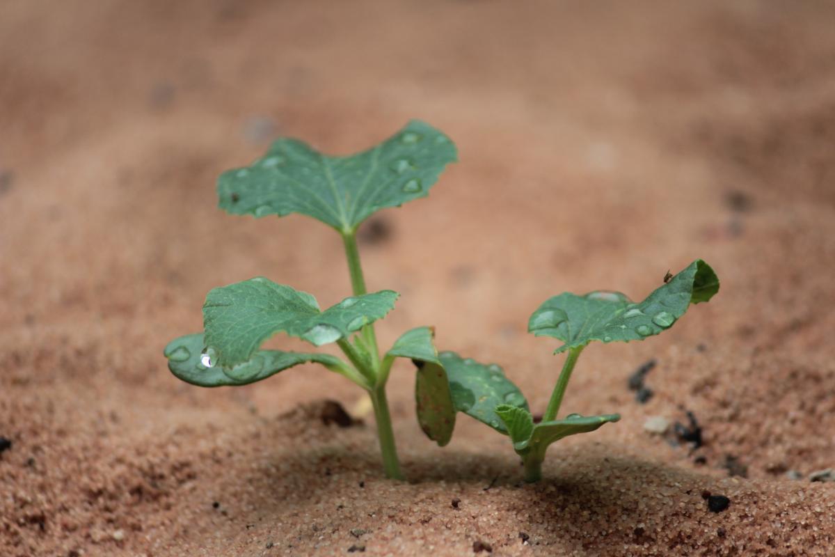 Seedling Plant Leaf
