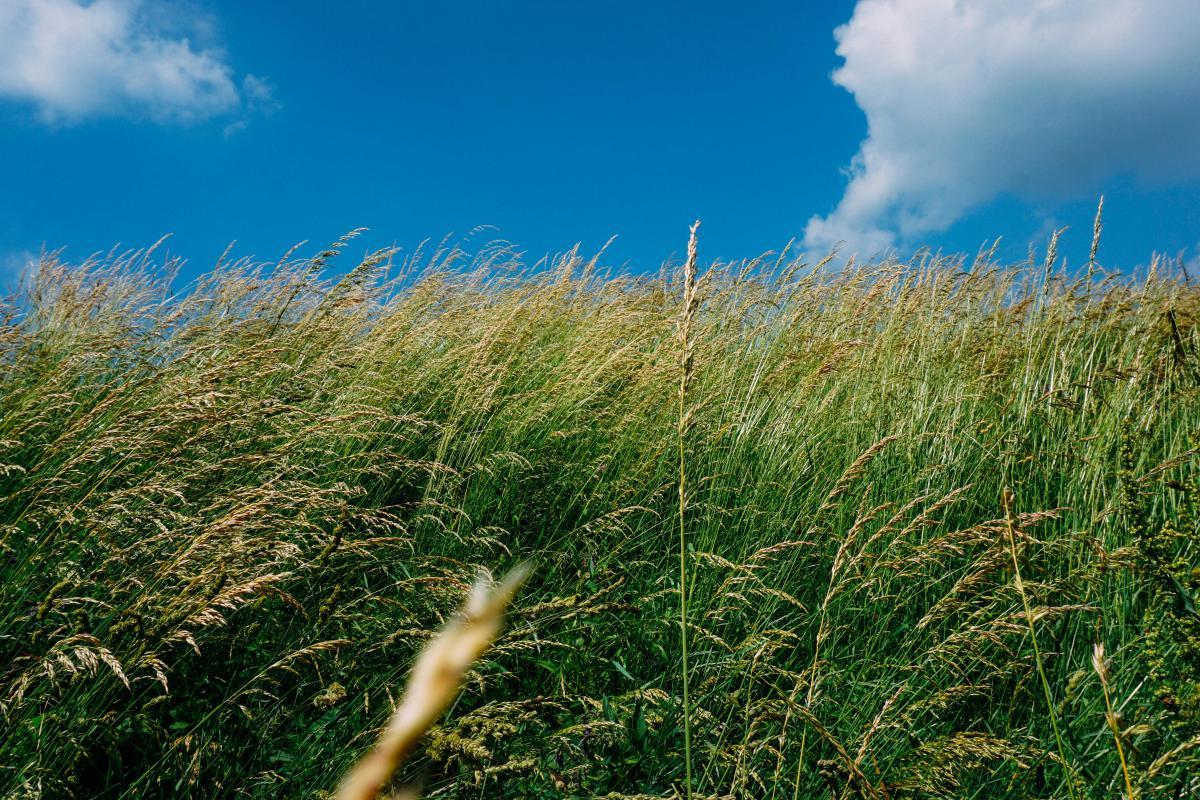 green grass plants
