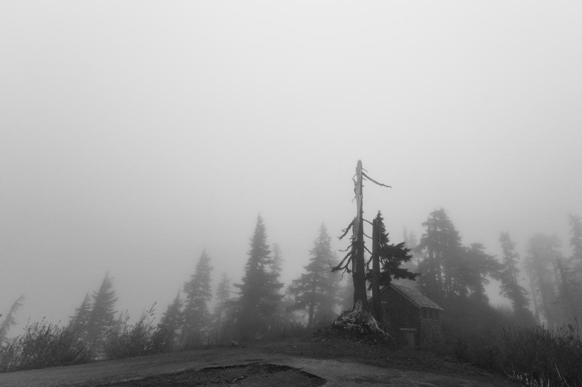 grey foggy trees