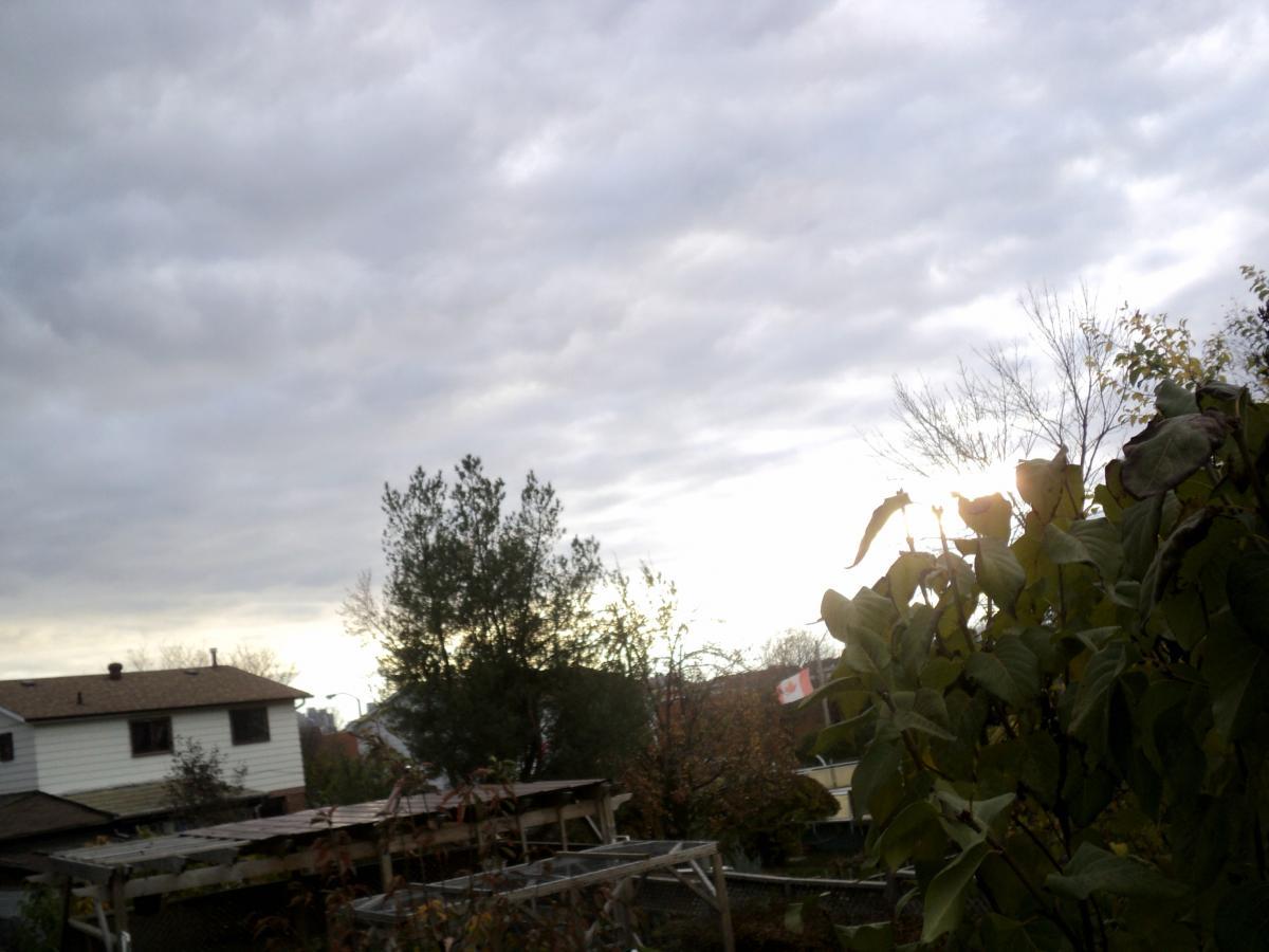 Tree Landscape Sky #199679