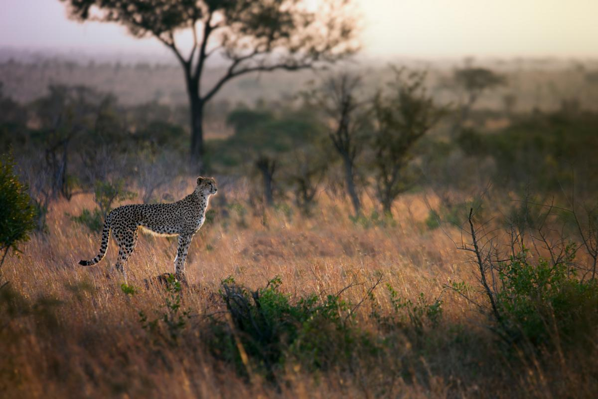 Wilderness Safari Zebra