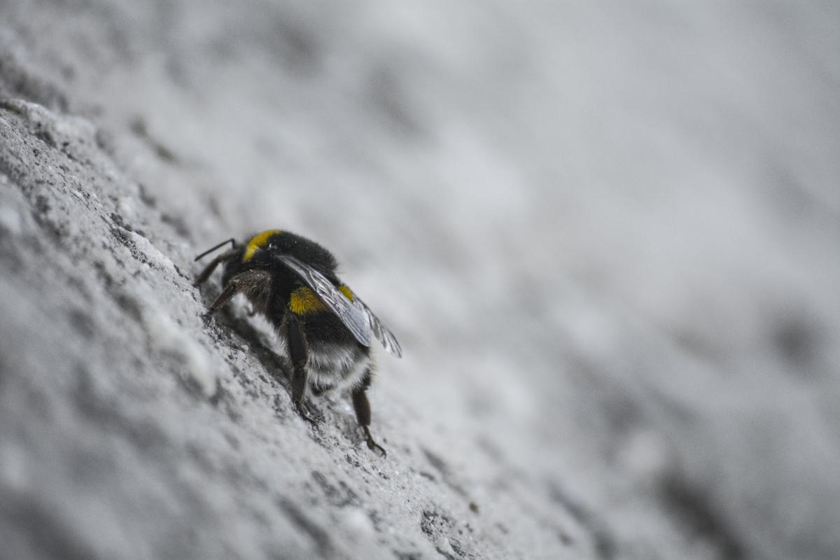 Ladybug Insect Beetle #202257