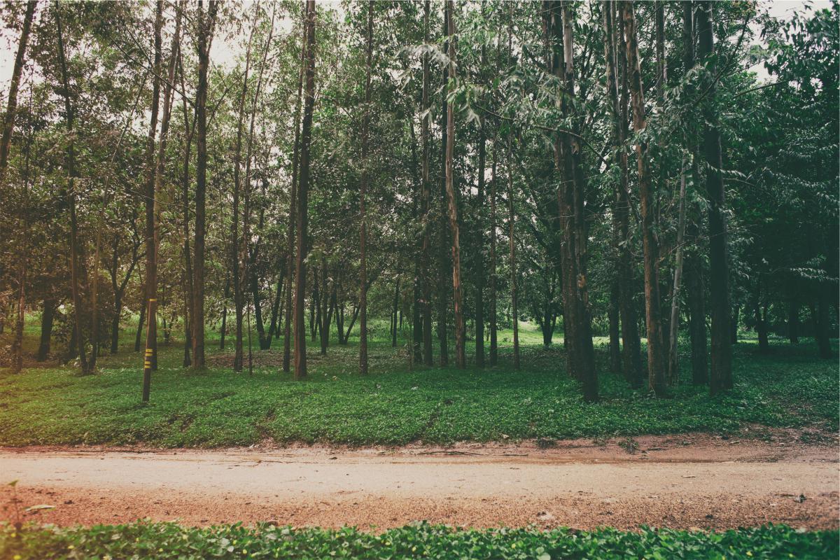 park trees grass