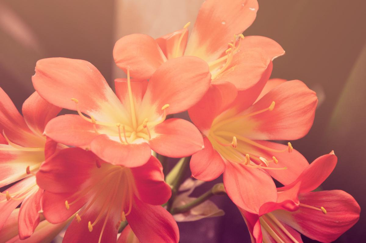 Free Pink Orange Flower 20408 Stock Photo Avopix