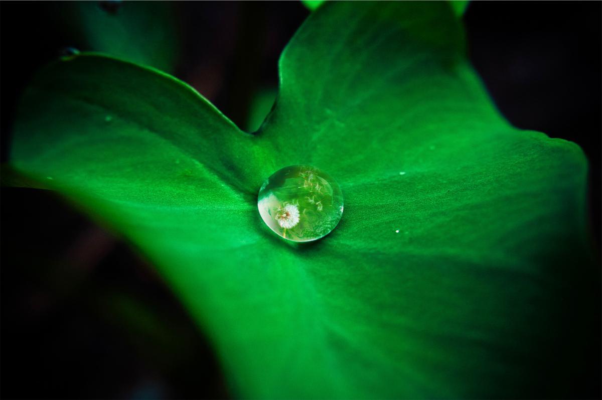green leaf water