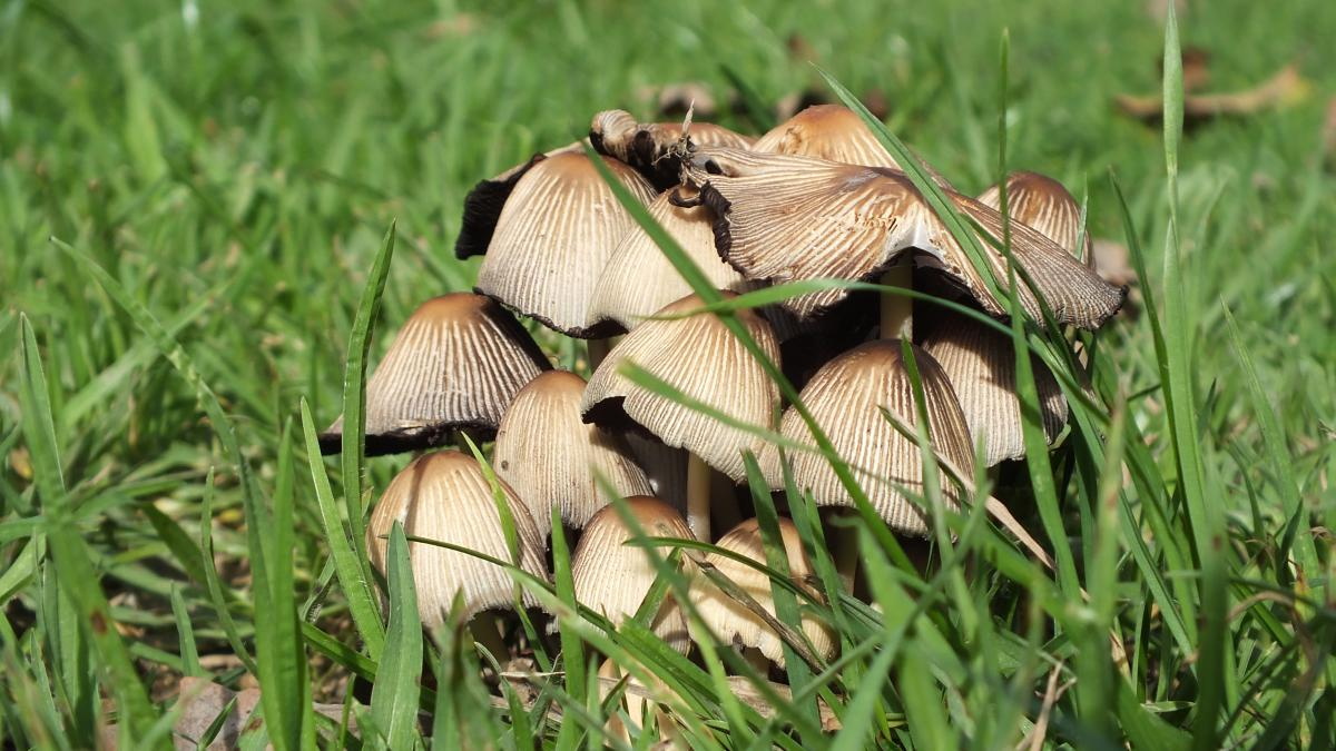 Mushroom Vegetable Produce